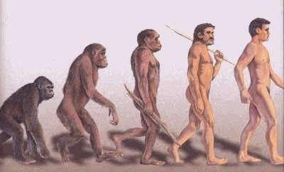 Les ancêtres de l'Homme ont remanié quelques portions de leur génome, mais lesquelles ? . © DR