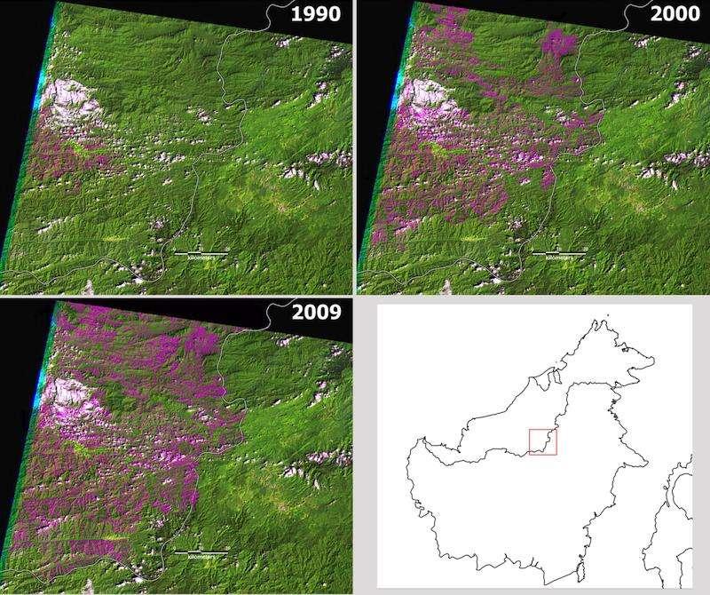 Les images Landsat montrent les routes successives (en rose) construites entre 1990 et 2009 dans une région boisée du « Cœur de Bornéo », à Sarawak. © Jane Bryan et al., Plos One, 2013