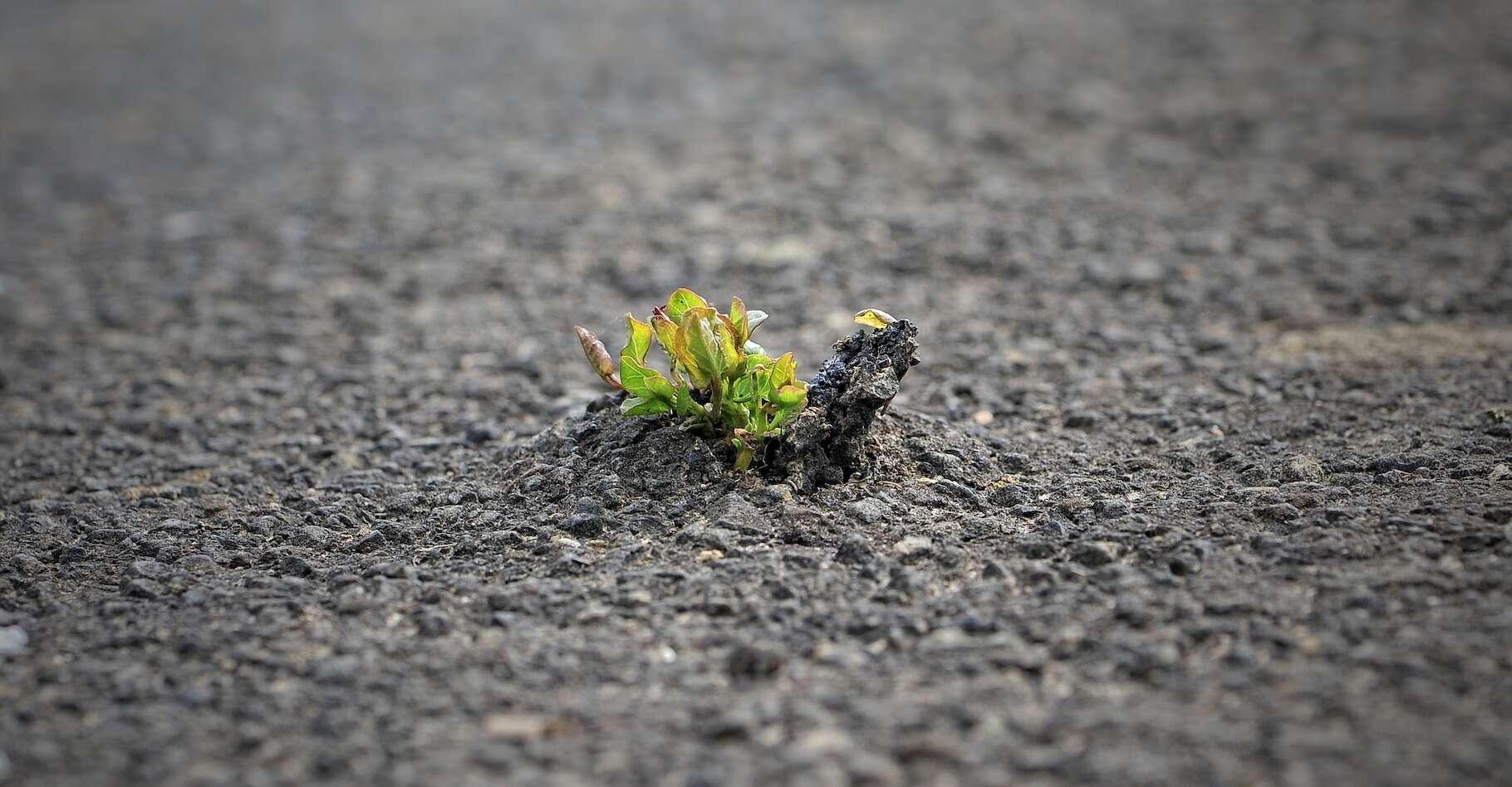« Le succès appelle le succès. » Ainsi se résume l'effet Matthew. Mais des chercheurs viennent aussi de démontrer que « ce qui ne nous tue pas nous rend plus forts ». © bella67, Pixabay License