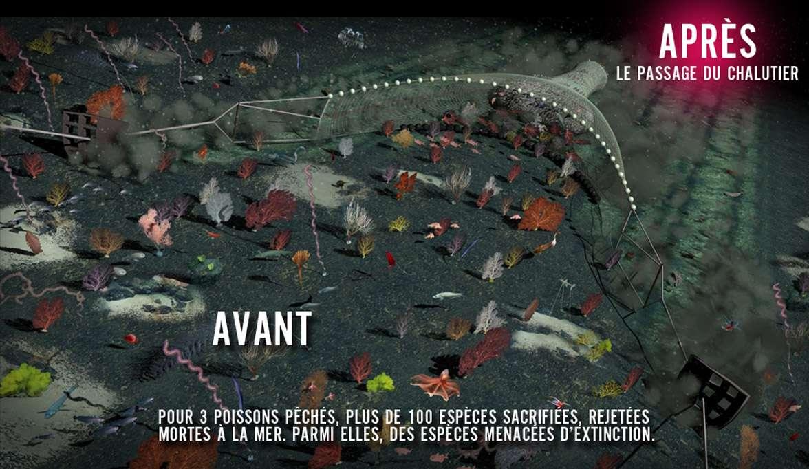 Les chaluts utilisés pour la pêche profonde sont posés sur le fond océanique et le racle. On estime que pour trois poissons pêchés, plus de 100 espèces sont sacrifiées. © Capture d'écran, Association Bloom
