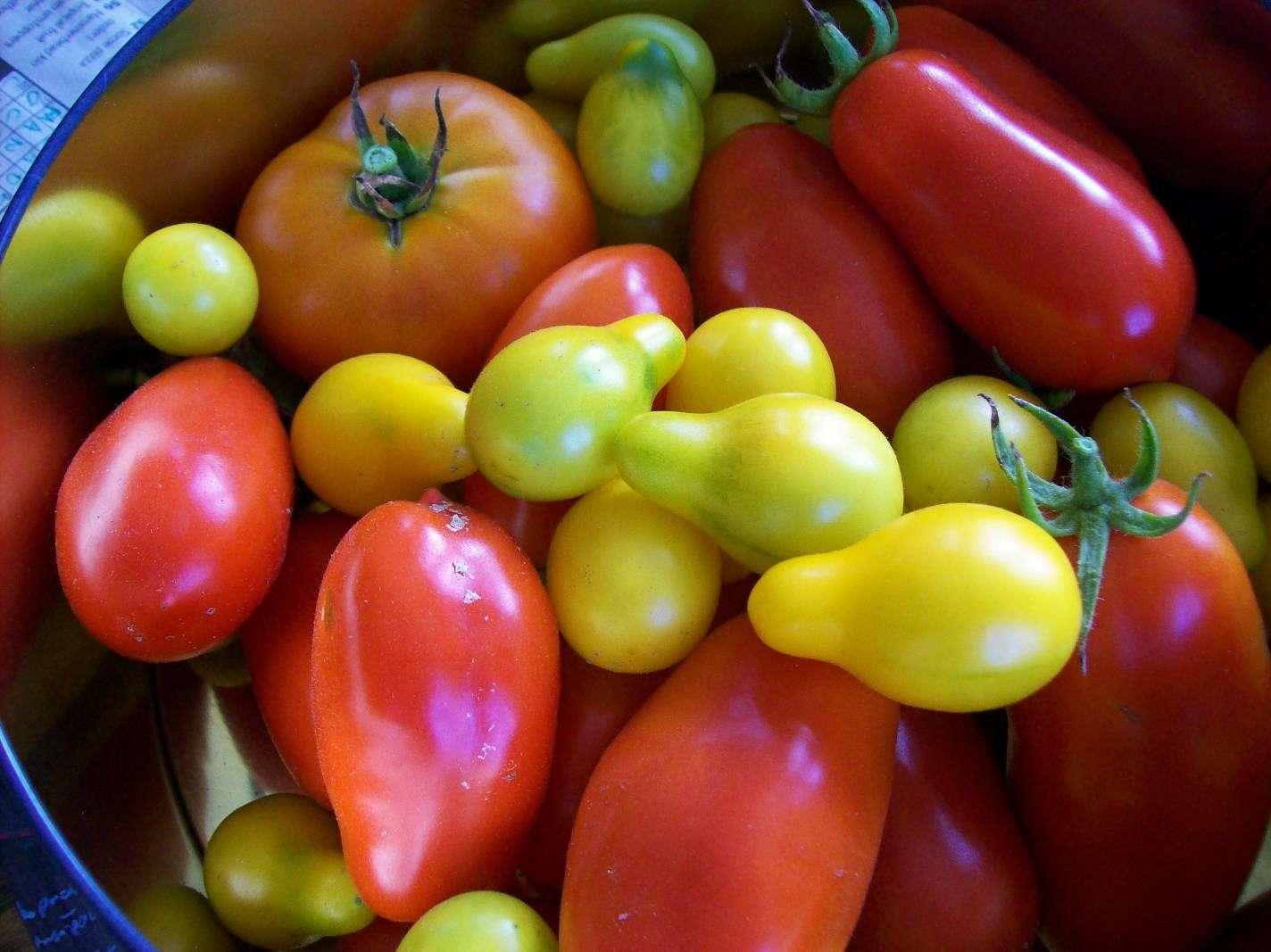 Une alimentation saine, à base de fruits et de légumes, semble l'un des secrets pour vivre plus longtemps, à défaut d'inverser le vieillissement. Une étude parue en début d'année dans la revue Plos One montre que des souris nourries à base d'un régime moins calorique voyaient leurs télomères s'allonger... et mouraient plus tard que les autres. © Jazzijava, Fotopédia, cc by nc nd 2.0