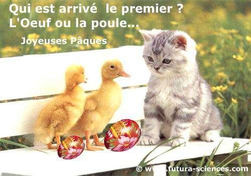 Qui est arrivé le premier, l'œuf ou la poule ? © Futura-Sciences