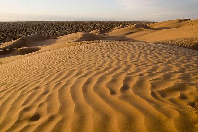 La bactérie du désert est capable de se diviser tout en se protégeant de la déshydratation et cale son mode de vie sur le cycle de l'eau. © antonioperezrio.com, Flickr, cc by nc-nd 2.0