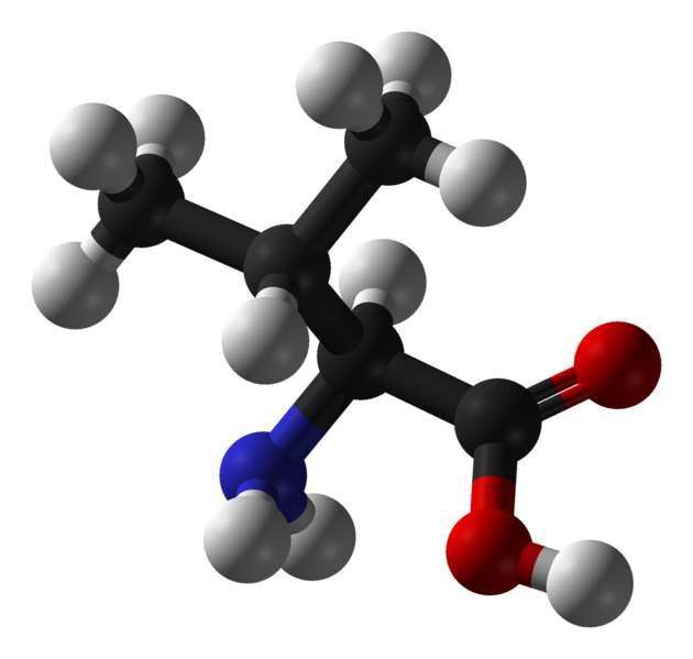 La valine est un acide aminé essentiel. © Benjah-bmm27, Wikimedia, domaine public