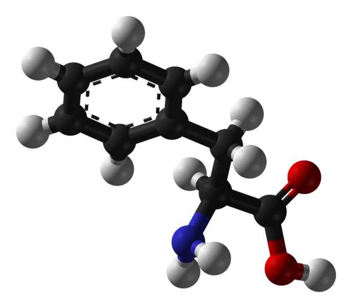 La phénylalanine est un acide aminé essentiel. © Benjah-bmm27, Wikimedia, domaine public