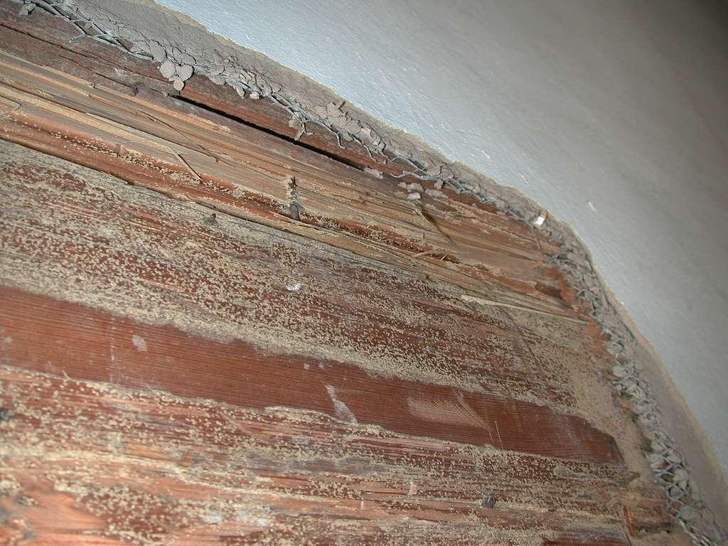Le diagnostic termite permet de confirmer une impression visuelle de la présence de termites. © Editor B, flickr, CC BY 2.0