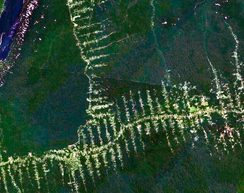Le grignotage de la forêt amazonienne, ici vu par un satellite de la Nasa, commence à se réduire. © Nasa