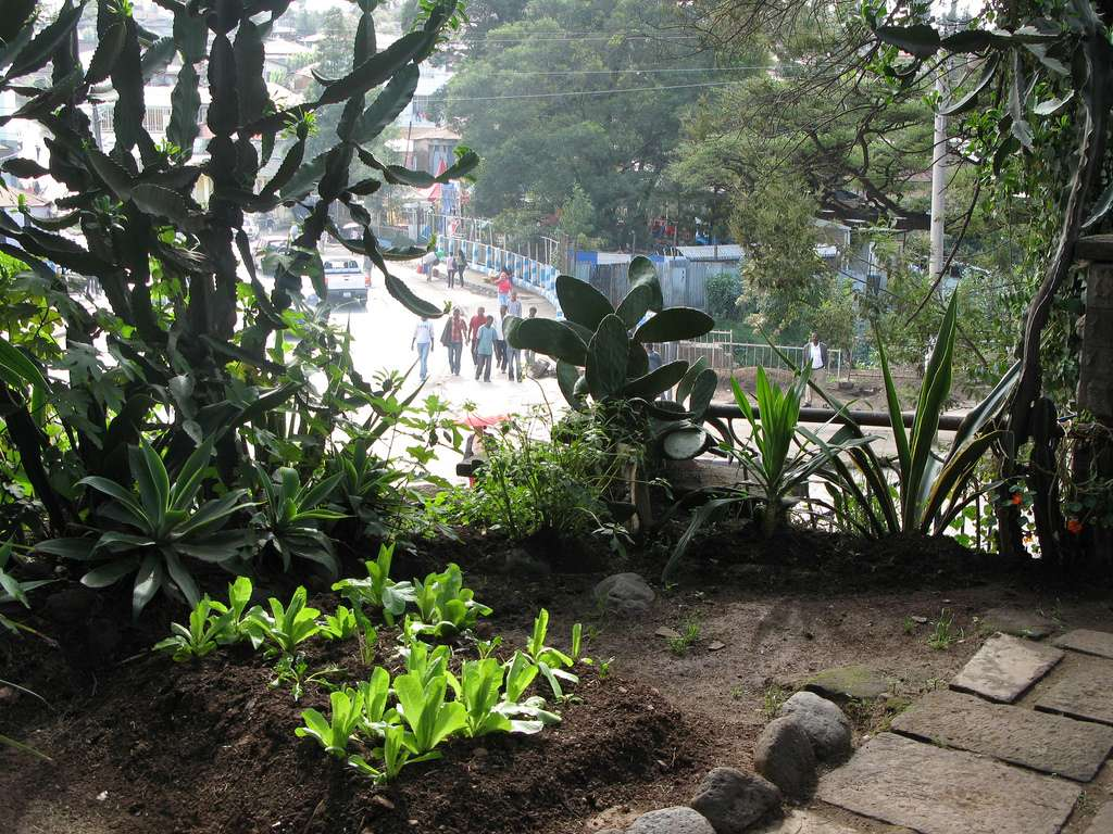 Agriculture urbaine en Éthiopie. © Sustainable sanitation, Flickr, cc by 2.0