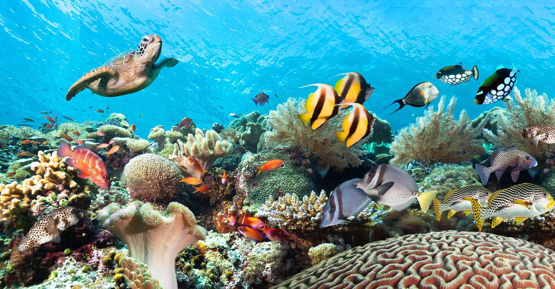 Victime de la surexploitation, de la pollution et du réchauffement climatique, la biodiversité marine s'épuise. Heureusement, des sanctuaires marins ont été créés pour lui offrir un peu de répit. © frantisek hojdysz, Adobe Stock
