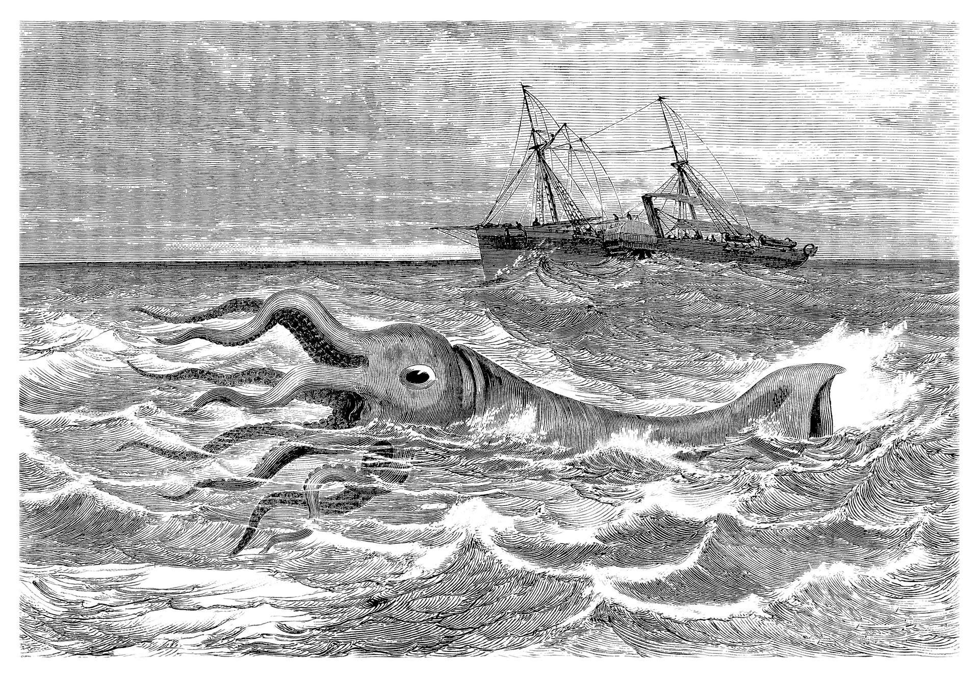 Le calamar géant est au cœur de plusieurs légendes de marins, notamment celle du Kraken. © Erica Guilane-Nachez, Adobe Stock