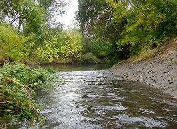 Les eaux de ce ruisseau contenaient au moment de la photographie dix fois la concentration mortelle de pyréthroïdes pour le crustacé bio-indicateur de la qualité des eaux. © Donald Weston / UC Berkeley