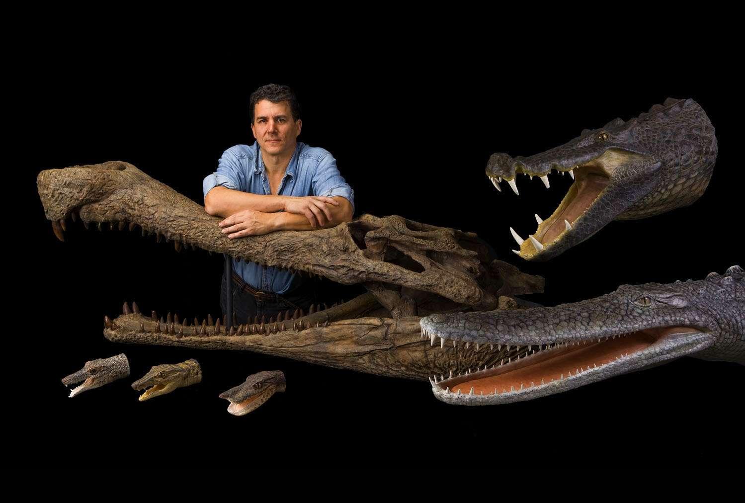 Paul Sereno avec ses crocodiles sahariens. Supercroc lui sert d'accoudoir. BoarCroc (Croc Sanglier) est en haut à droite, Pancake Croc (Croc Galette) en bas à droite. Les petites têtes, en bas à gauche, sont, respectivement, RatCroc, DogCroc et DuckCroc. © Mike Hettwer et National Geographic
