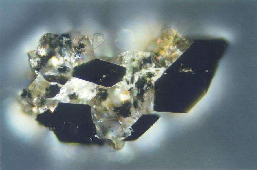 Grain de maricite au microscope en réflexion. © 2.ulg.ac.be