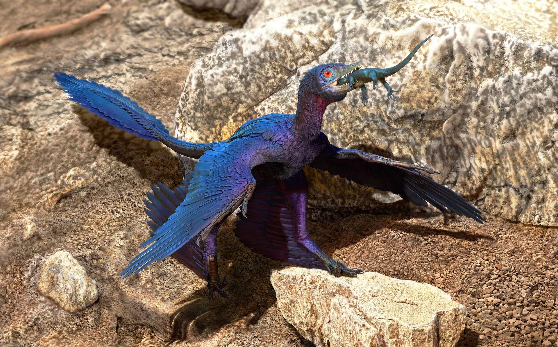Microraptor zhaoianus avalant un lézard Indrasaurus. © Doyle Trankina