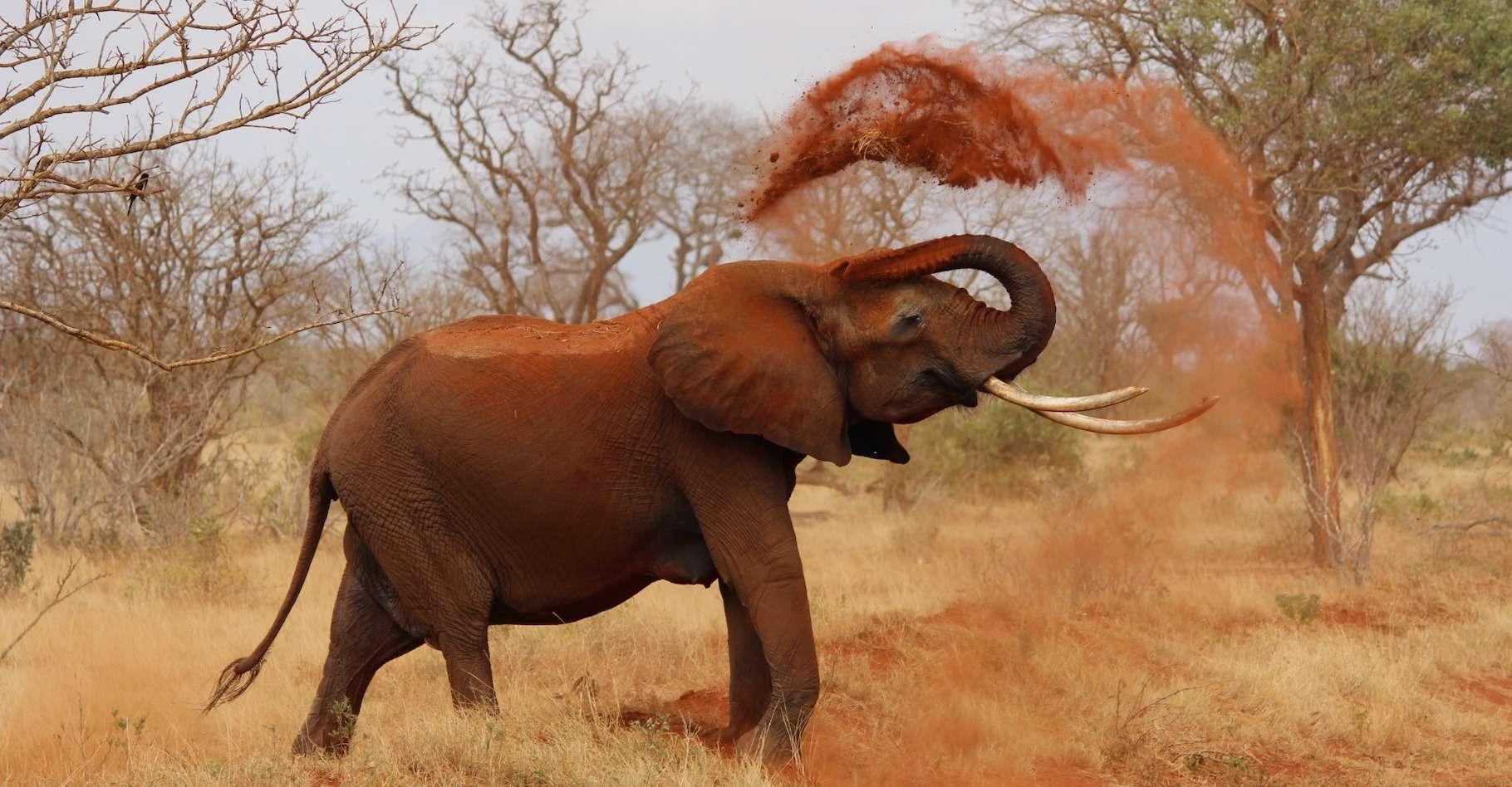 Des chercheurs ont constaté que le broutement des éléphants favorise les espèces à croissance lente. Celles-ci sont de plus en plus abondantes dans les zones à éléphants. Les plantes à croissance lente ont un bois dense et stockent donc plus de carbone que les espèces à croissance rapide. © kikatani, Pixabay License