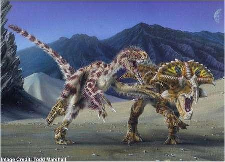 Un Velociraptor mongoliensis attaquant un Protoceratops andrewsi © Todd Marshall