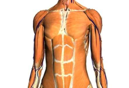 Les muscles d'un cadavre se rigidifient rapidement. © Google/Noobformua, Youtube