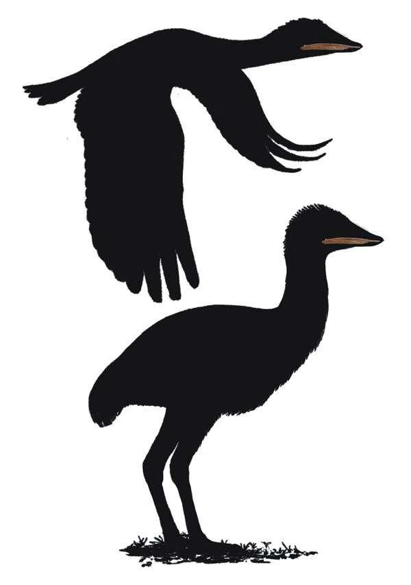 La découverte d'ossements d'oiseaux géants datant du Crétacé apporte des informations supplémentaires sur la biodiversité de l'époque des dinosaures. © John Conway, DR
