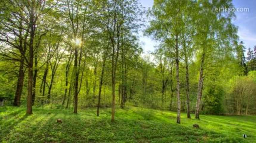 Timelapse : la vie d'une forêt en 40 secondes