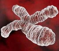 Tout savoir sur l'ADN, avec ce dossier complet. © DR