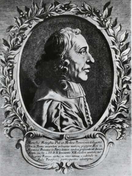 Marcello Malpighi, physiologiste et botaniste, découvreur des tubes de Malpighi. © National Institutes of Health, domaine public