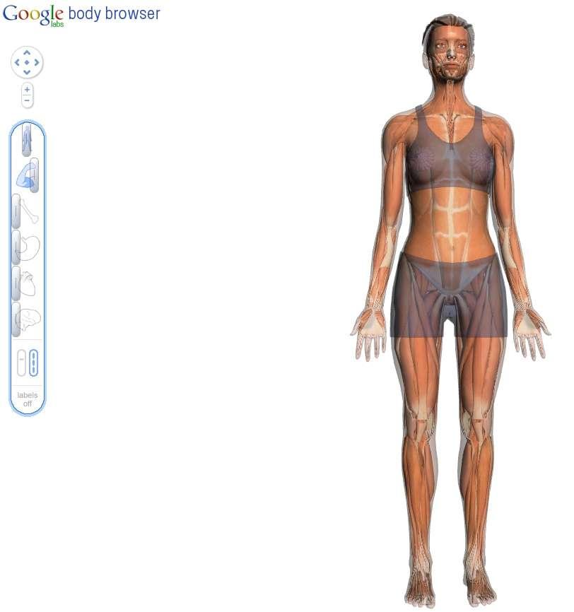 Une image obtenue avec Body Browser. Le corps (curseur du haut) est visible avec une saturation moyenne. Les muscles sont mis en évidence (deuxième curseur) et tout le reste est caché (les autres curseurs sont au fond à gauche). © Google