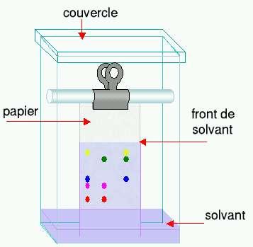 Schéma d'une chromatographie sur papier. © Bloody-libu, Wikimedia cc by sa 3.0