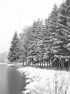 © C. LepageLe roi des forêts, toujours magnifique même et surtout en hiver !