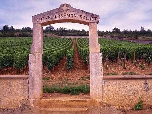 Le Montrachet produit des vins blancs accompagnant des mets fins. © DR