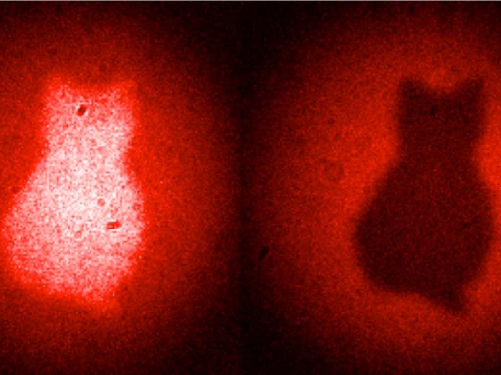 Le chat de Schrödinger est presque l'emblème du phénomène d'intrication quantique. Schrödinger lui-même était d'origine autrichienne et l'on peut voir comme un clin d'œil au célèbre physicien cette image obtenue avec des paires de photons intriqués par ses collègues et compatriotes. © Patricia Enigl, IQOQI