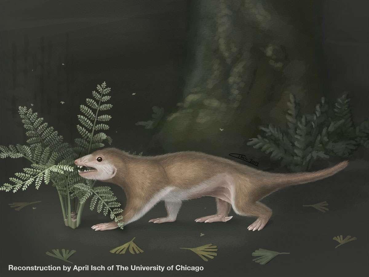 Reconstitution de Megaconus dans l'environnement où il évoluait au Jurassique moyen, voici 165 millions d'années. Dans ce dessin d'April Isch, il cherche de la nourriture de nuit. © April Isch, université de Chicago
