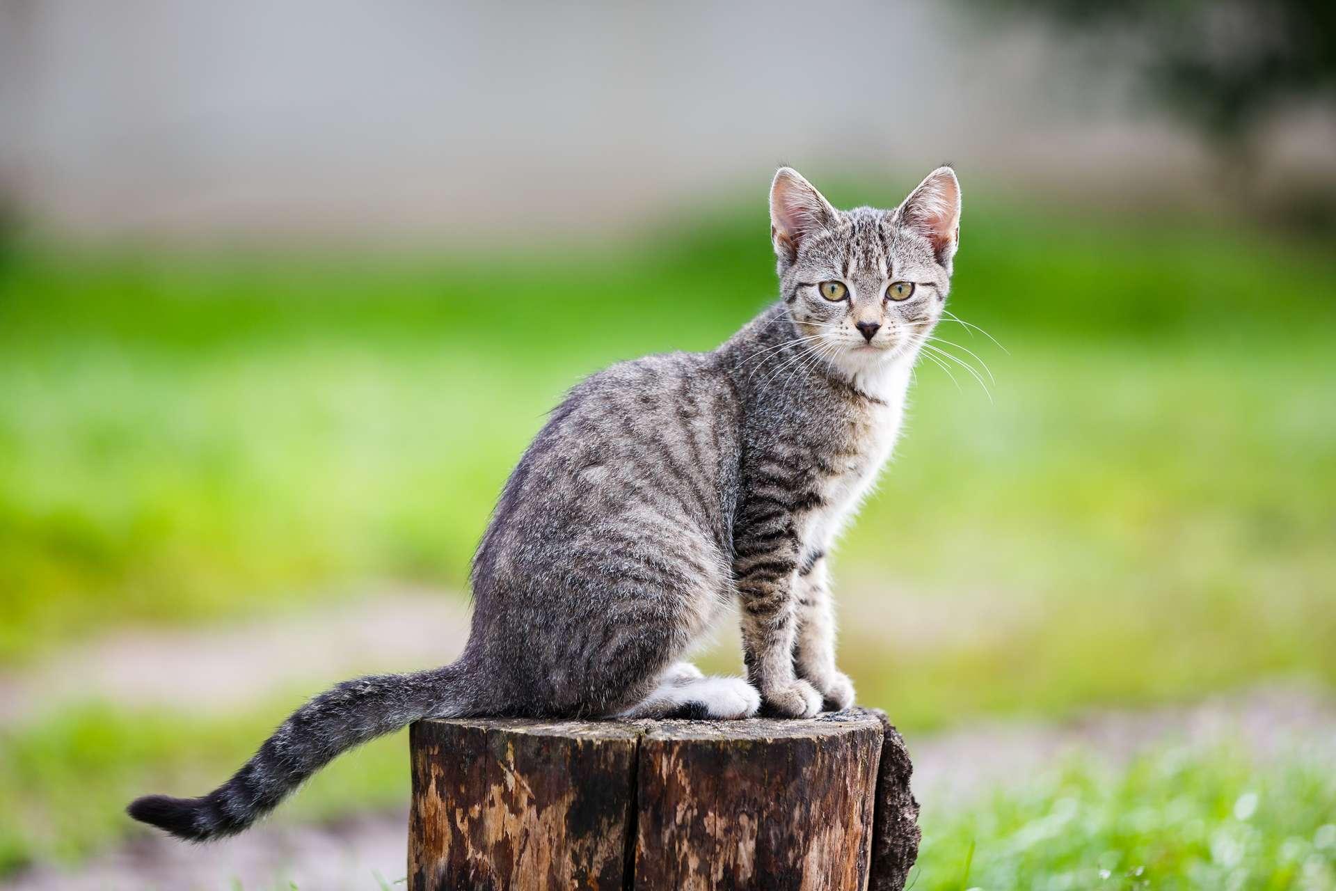 « Le chat est le seul animal qui soit arrivé à domestiquer l'homme » disait Marcel Mauss. © Castenoid, Adobe Stock