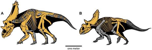 Les dinosaures retrouvés dans l'Utah ressemblent au tricératops. © Plos One