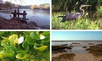 Journée mondiale des zones humides, réservoirs biologiques