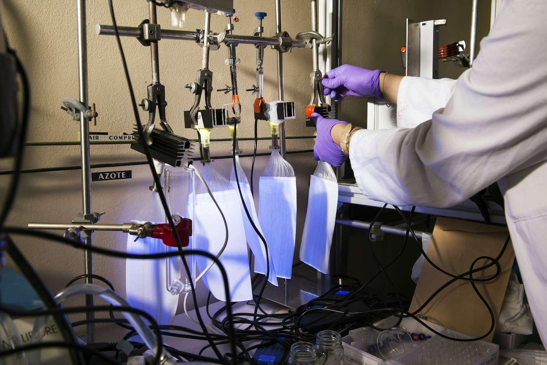 L'innovation s'appuie sur un procédé chimique appelé photocatalyse, connu depuis les années 1990, qui permet de neutraliser les polluants sous l'action de la lumière. © Cyril Fresillon, IRCELYON, CNRS