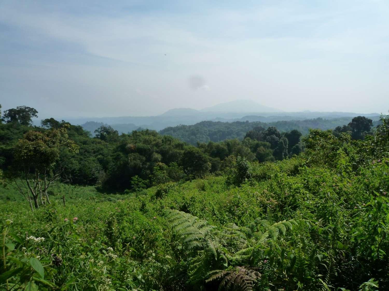 Cette forêt tropicale, riche en espèces végétales d'intérêt médicinal, se blottit dans le parc national du mont Halimun Salak, sur l'île indonésienne de Java. © Alexandra Müllner-Riehl, Université de Leipzig