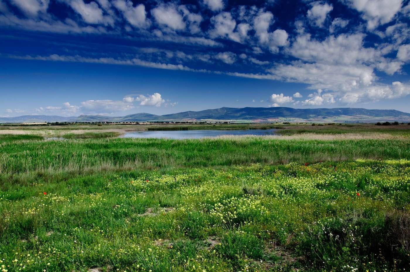 Les prairies à haute biodiversité pourraient davantage résister aux événements climatiques extrêmes. Ici, une prairie dans le Parc national des Tablas de Daimiel, en Espagne. © yannboix, Flickr, CC by 2.0