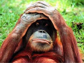Quand un singe joue à un jeu vidéo sans l'usage de ses mains