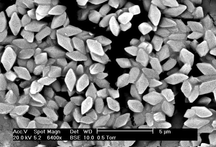 Bacillus thuringiensis - Crédits jim bucjman / Wikipédia