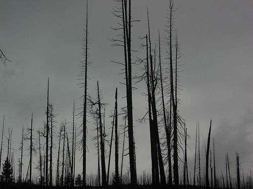 Une forêt morte, paysage sans doute commun à la transition Permien-Trias. © Brooklyn CC by-sa