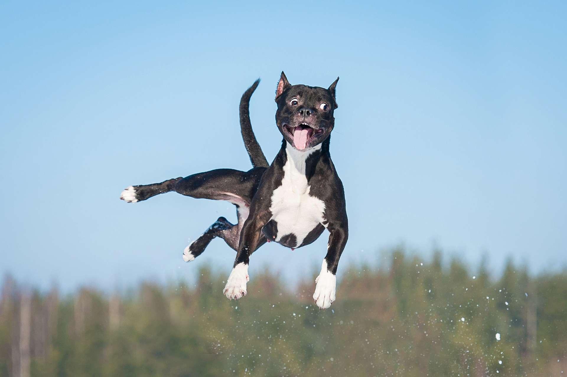 L'adolescence des chiens présentent plusieurs similarités avec l'adolescence des humains. De fait, les auteurs de l'étude considèrent que les chiens pourraient être des modèles intéressants pour étudier la puberté. © Grigorita Ko, Adobe Stock