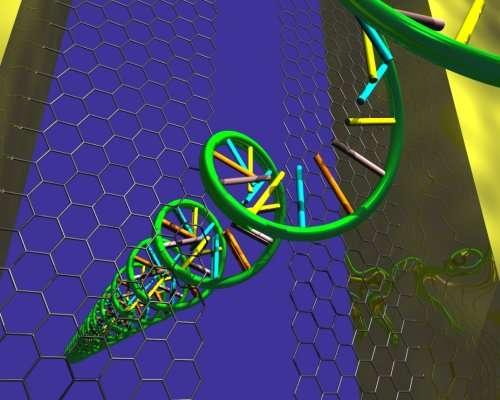 Un brin d'ADN traversant le feuillet de graphène. Crédit : Henk Postma