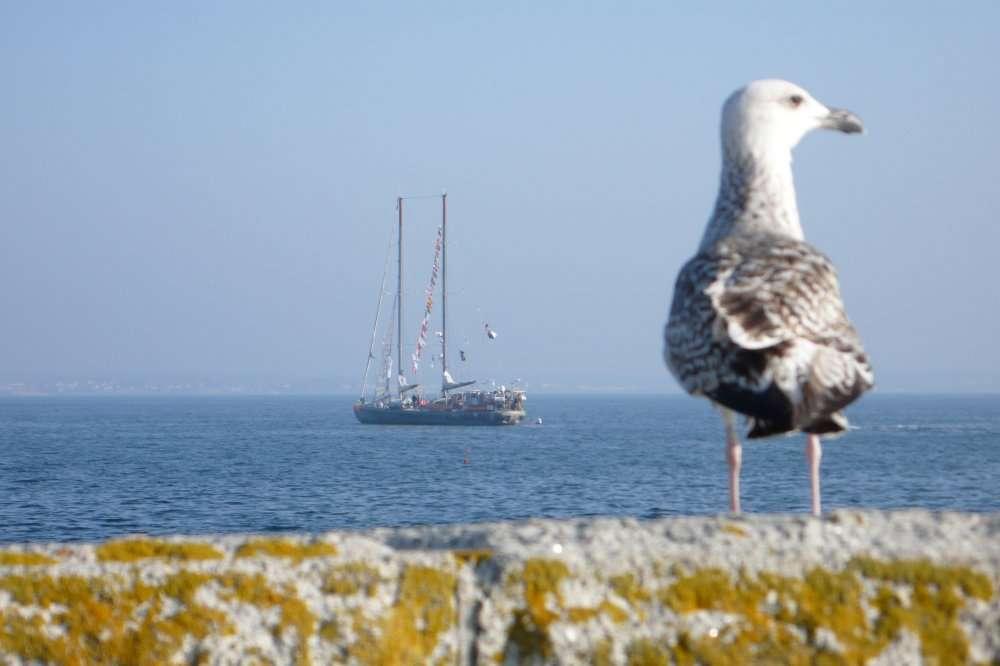 Le voilier Tara, après un tour du monde océanographique et une exploration de l'océan Arctique, sillonne actuellement la Méditerranée à la recherche du plastique, un polluant notoire. C'est l'une des atteintes actuelles à l'océan mondial. Il y en a d'autres. © Futura-Sciences