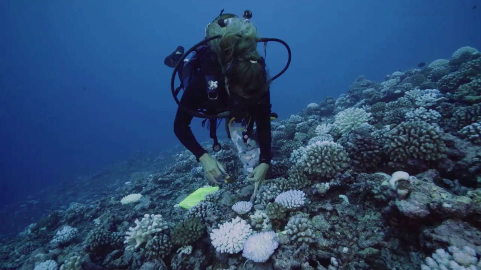 Une plongeuse prélève un échantillon de récif coralien. © Wochit