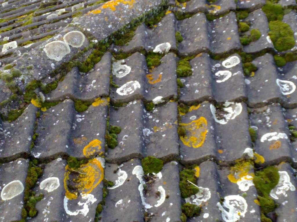 Pour éviter qu'une toiture soit colonisée par la mousse, il faut la traiter avec de l'antimousse. © pigsonthewinguk, Flickr, CC BY 2.0