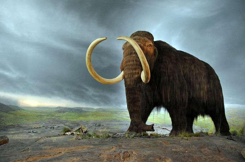 Les mammouths laineux seraient arrivés en Amérique du Nord durant une période glaciaire, en traversant le détroit de Béring alors exondé. © Flying Puffin, Wikimedia Commons, cc by sa 2.0
