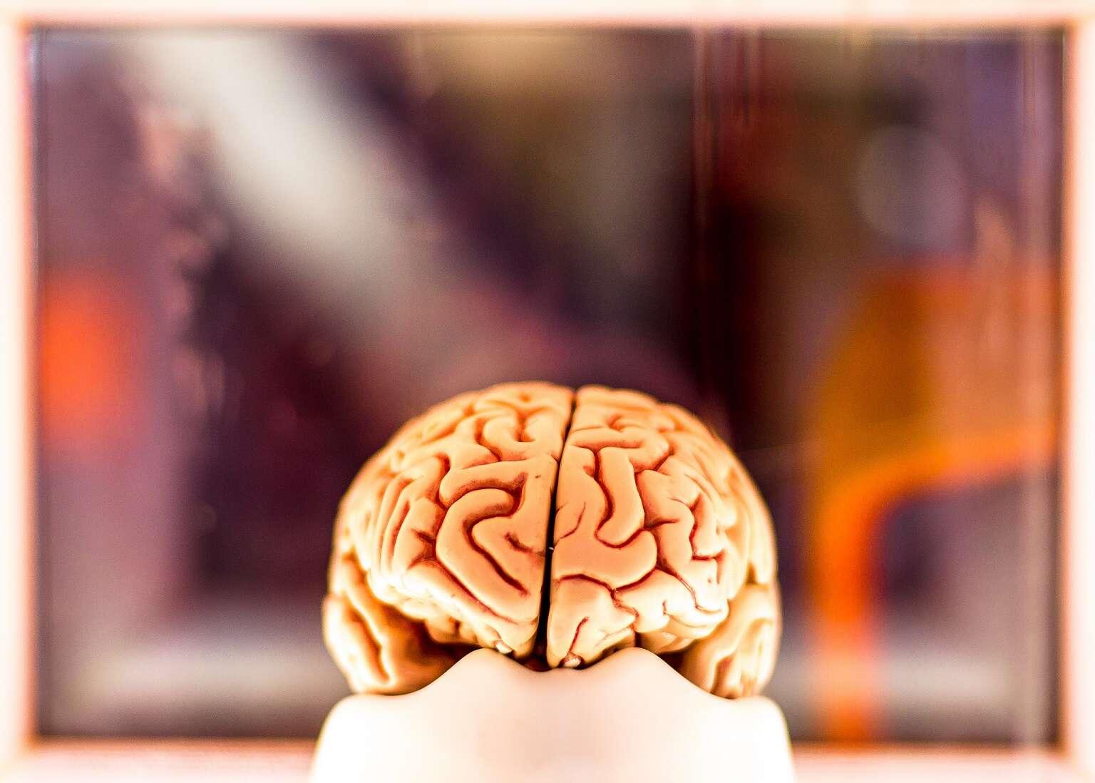 Le système nerveux central comprend l'encéphale et la moelle épinière. © Christian Weidinger, Flickr, CC by nc nd 2.0