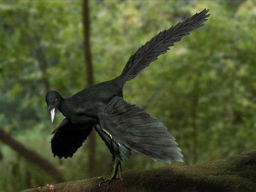 D'après une étude parue en 2011, certaines des plumes de l'archéoptéryx étaient noires, ce qui a inspiré l'auteur de cette reconstitution artistique de l'animal. © Nabu Tamura, Wikimedia Commons, cc by sa 3.0