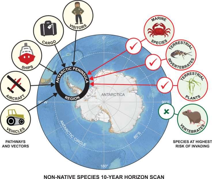 L'Antarctique risque d'être colonisé par plusieurs espèces invasives dans les 10 prochaines années, en raison de la croissance du tourisme, des transports et des activités de recherche. © British Antarctic Survey