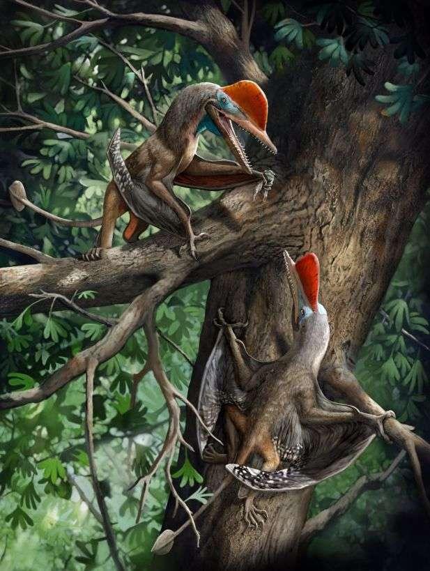 Reconstitution d'artiste du « Monkeydactyl », tel qu'est surnommé le ptérosaure Kunpengopterus antipollicatus. © Chuang Zhao